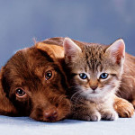 katenhond